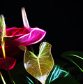 The Neon Garden by Cameron Wood