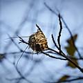 The Nest 1 by Teresa Mucha