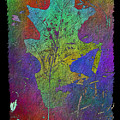 The Oak Leaf by Tim Allen