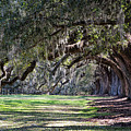 The Oaks At Boone Hall by Ed Waldrop