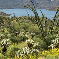 The Ocotillo View by Cathy Franklin