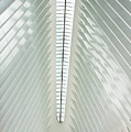 The Oculus Interior Platform by Robert VanDerWal