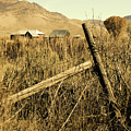 The Old Fence Post by David King