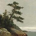 The Old Pine, Darien, Connecticut, 1872  by John Frederick Kensett