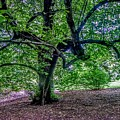 The Old Tree At Frelinghuysen Arboretum by Christopher Lotito