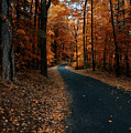 The Orange Road by Ross Powell
