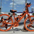 The Orioles Bicycle by To-Tam Gerwe