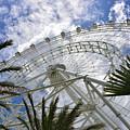 The Orlando Eye by David Lee Thompson