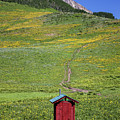 The Outhouse by Maria  Struss