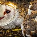 The Owl by Dieter Lesche