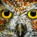 The Owl by Ivanhoe Ardiente
