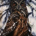The Owl by Janet Lavida