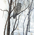 The Owl by Mary Tuomi