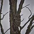 The Owl by Ty Shults