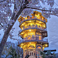 The Pagoda In Spring At Blue Hour by Mark Dodd