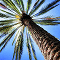 The Palm Tree by Susan Campbell