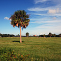 The Palmetto Tree by Susanne Van Hulst