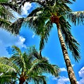 The Palms by Lisa Renee Ludlum
