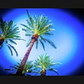 The Palms Of Scottsdale  by Rick Reesman
