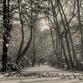 The Park by Ignacio Leal Orozco
