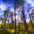 The Pastel Forest by David Pyatt