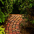 The Path by Christopher Holmes