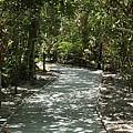The Path by Natalia Castro