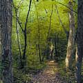 The Path by Sari Sauls