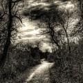 The Path Seldom Taken by Jeff Watts