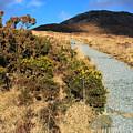 The Path Upwards by Jennifer Robin
