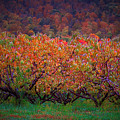 The Peach Orchard by Tom Cruickshanks