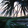 The Peeking Palms by Debbie May