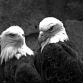 The Pensive Pair Black And White by Adam Jewell