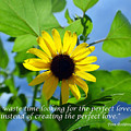 The Perfect Lover  by Heather S Huston