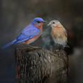 The Perfect Pair by Jai Johnson