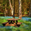 The Perfect Picnic Spot by David Patterson