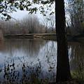 The Pine River by Linda Kerkau
