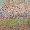 The Pink Orchard  Orchard With Blossoming Apricot Trees March 1888 by Joy of Life Art Gallery - Vincent Van Gogh