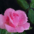 The Pink Rose by Betty LaRue