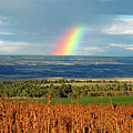 The Pleasant View Rainbow by David Lee Thompson