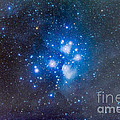 The Pleiades, Also Known As The Seven by Alan Dyer