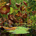 The Pond In Fall by Christine Montague
