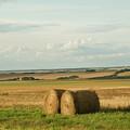 The Prairies by Deanna Paull