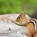 The Praying Chipmunk by Brian Hale