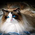 The Blue Eyed Princess  by Ken Andersen