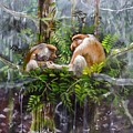The Probosis Monkey Family by Muyang Kumundan