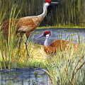 The Protector - Sandhill Cranes by Marilyn Smith
