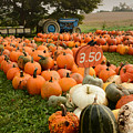 The Pumpkin Farm One by Charles Owens
