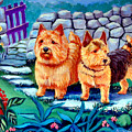 The Purple Gate - Norwich Terrier by Lyn Cook