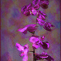 The Purple Orchid by Rusty R Smith